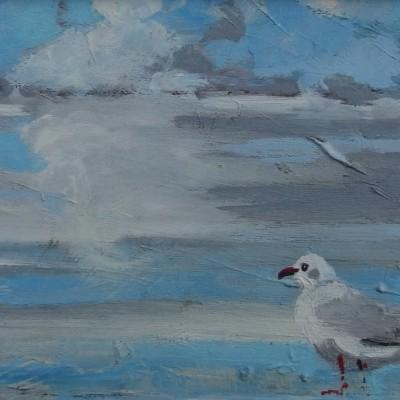 D001 - Mewa - olej - 30 x 20 | Seagull